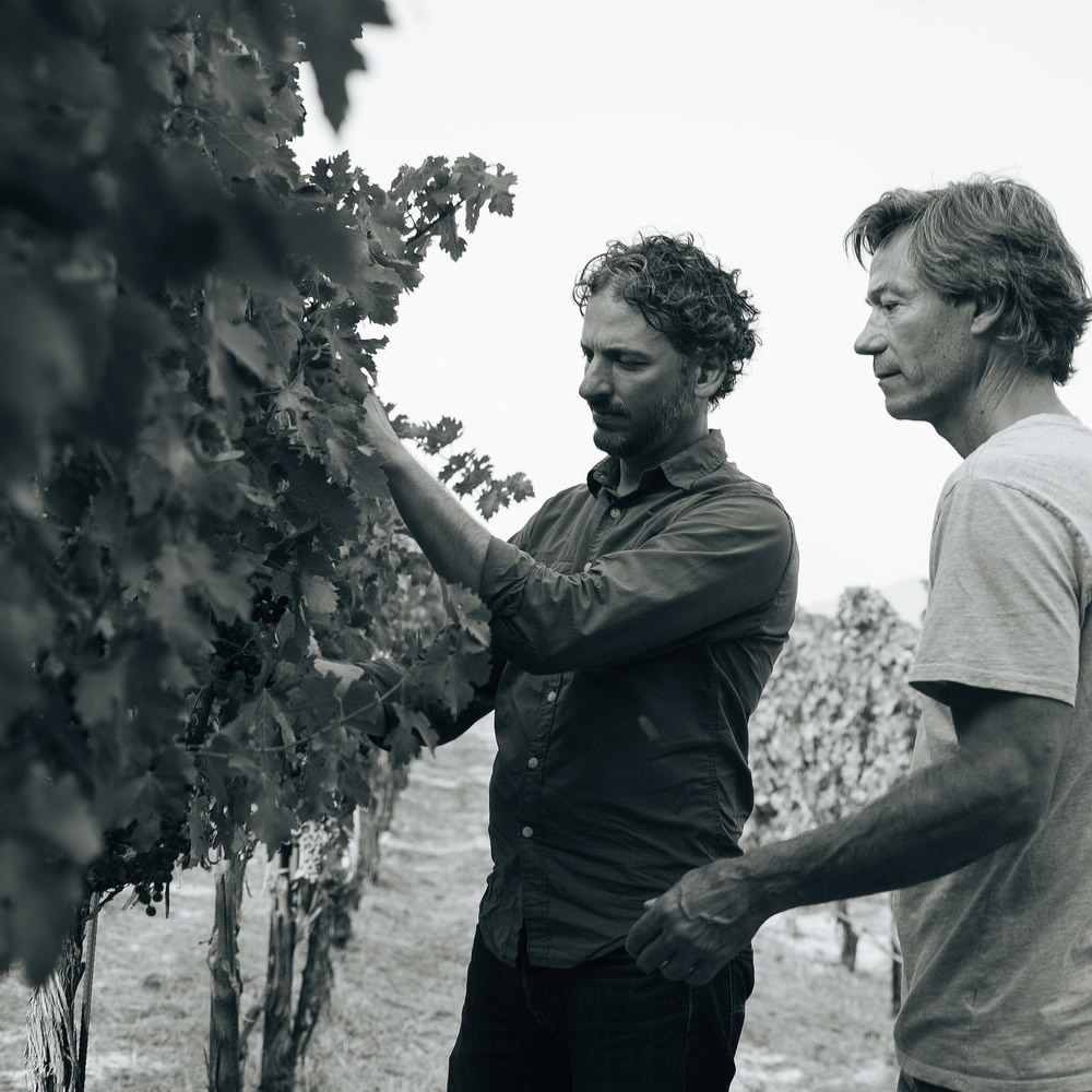 Diego Roig And John Boich Inspecting Grapevines